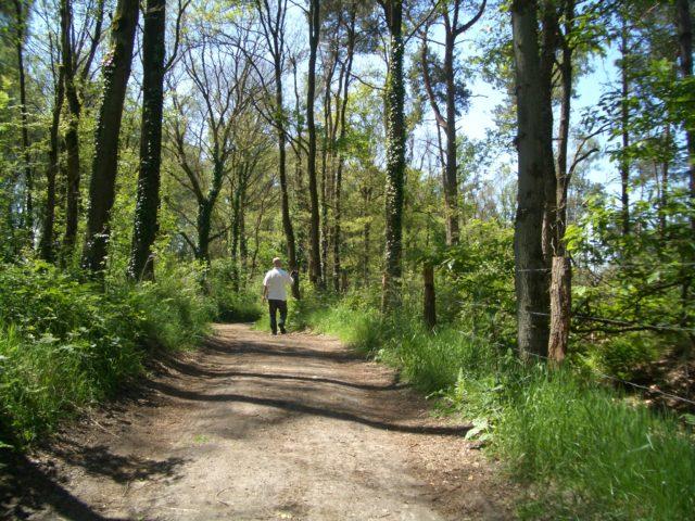 Waldbaden im Dingdener Märchenwald